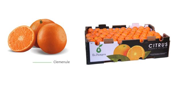mandarinas-img1