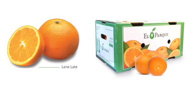 naranjas-img1