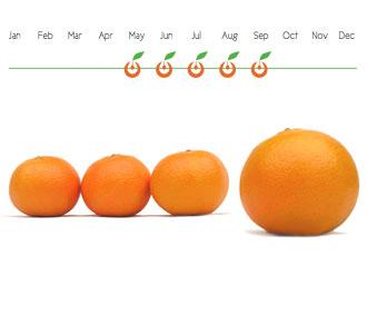 Disponibilidad Mandarinas
