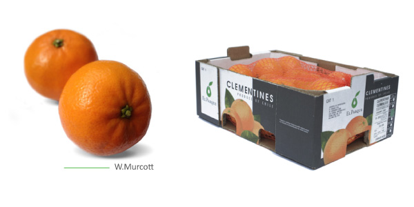 mandarinas-img2
