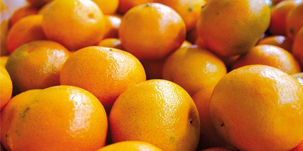 mandarinas-img4